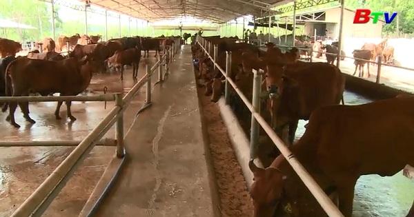 Chuyển giao khoa học kỹ thuật trong chăn nuôi bò