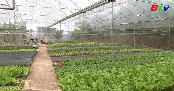 Trồng rau ăn lá hướng hữu cơ trong nhà lưới kín