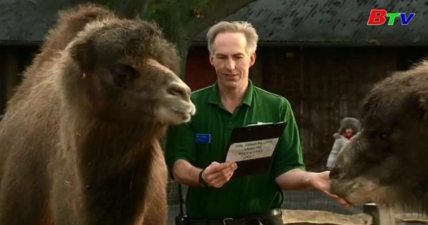 Vườn thú Luân Đôn kiểm kê động vật