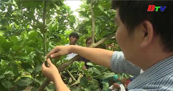 Kết quả từ chương trình dạy nghề cho người lao động nông thôn