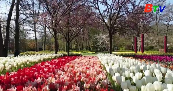 Hà Lan – Thiên đường hoa Tulip Keukenhof vắng bóng du khách