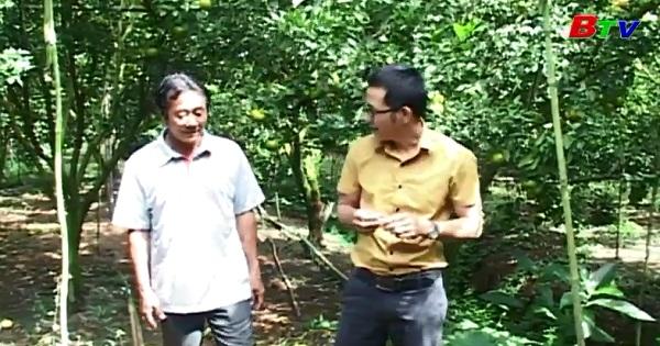 Tỷ phú cam sành - làm gÌàu từ vùng đất chết
