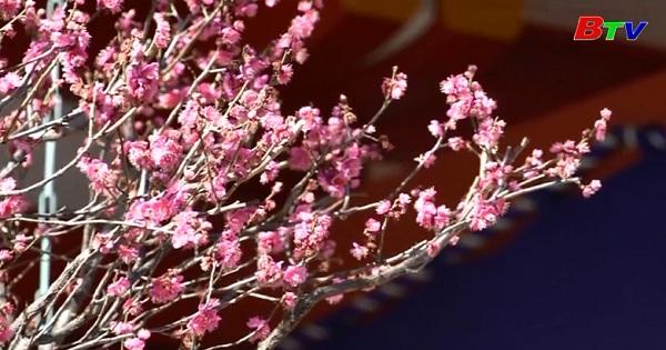 Lễ hội ném đậu chào đón mùa xuân ở Nhật Bản