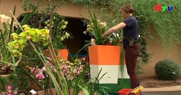 Lễ hội hoa lan tại vườn bách thảo Kew ở Luân Đôn