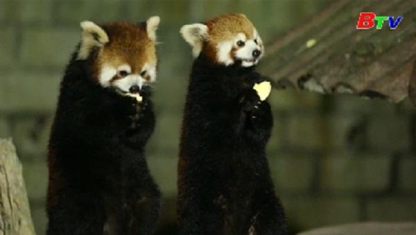 Chuyến tham quan ban đêm tại công viên động vật hoang dã Thượng Hải