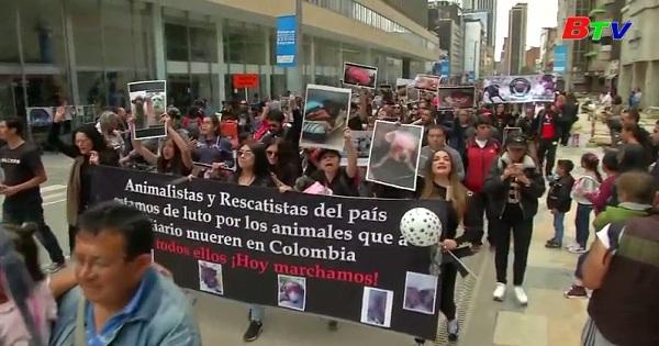 Diễu hành kêu gọi bảo vệ vật nuôi tại Bogota, Colombia
