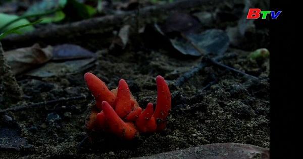 Phát hiện nấm độc gần rạn san hô Great Barrier của Australia