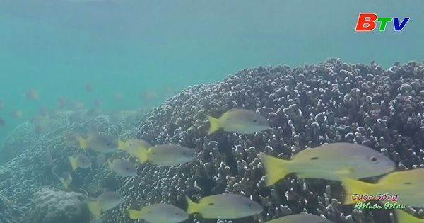 Biến đổi khí hậu hủy diệt các rạn san hô