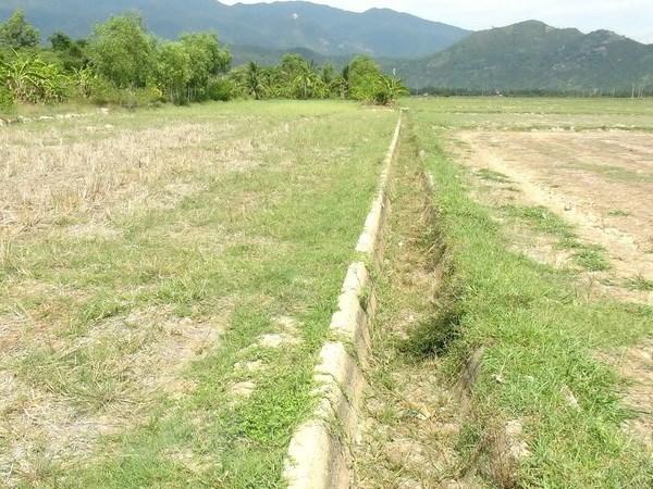 Hạn mặn hoành hành Đồng bằng sông Cửu Long