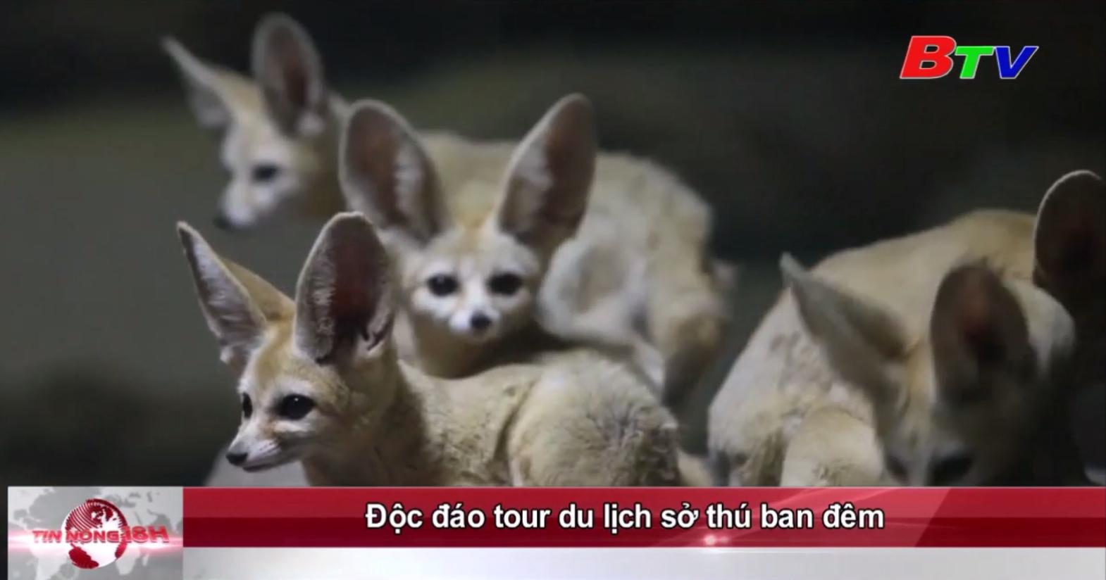 Độc đáo tour du lịch sở thú ban đêm