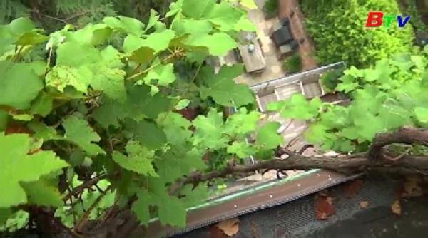 Ngắm vườn nha trĩu quả trên sân thượng tòa nhà ở Manhattan, New York