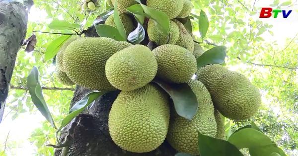 Hiệu quả từ chính sách hỗ trợ  phát triển vườn cây đặc sản ở Thuận An