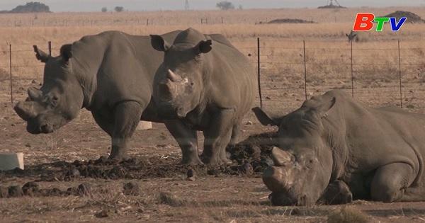 Trang trại tê giác của Nam Phi kêu cứu