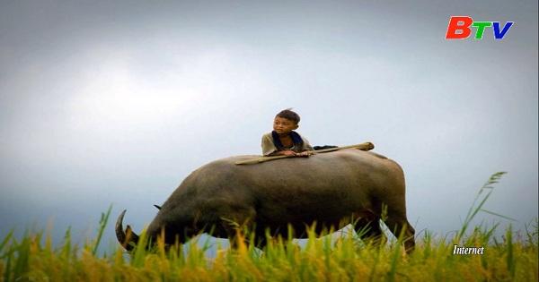 Hình tượng con Trâu trong văn hóa Việt Nam
