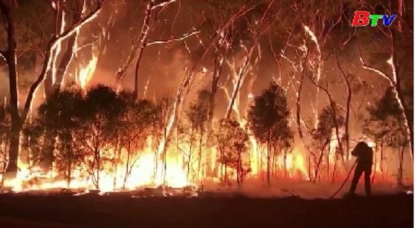 Cháy rừng ở Australia nguy cơ lan rộng