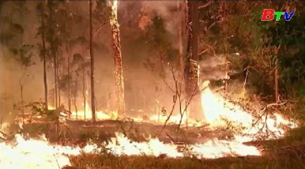 Australia ban bố tình trạng khẩn cấp vì cháy rừng