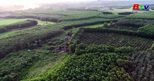 Nông nghiệp đô thị và kỹ thuật cao ở Bình Dương