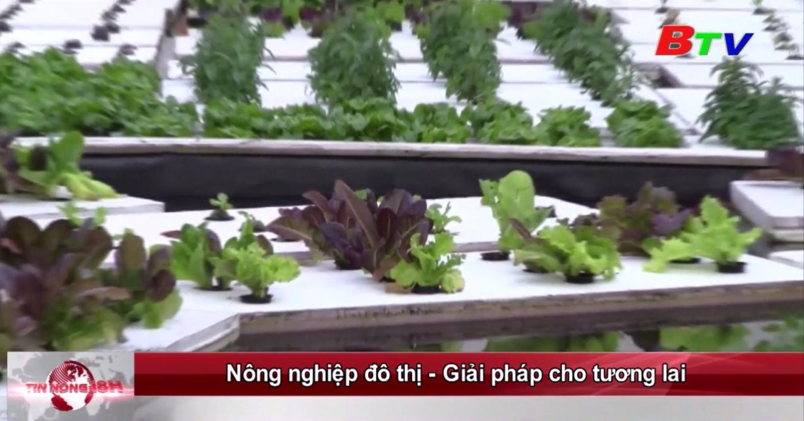 Nông nghiệp đô thị - Giải pháp cho tương lai