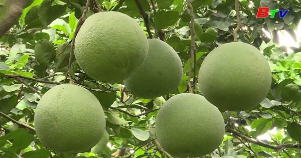 Mô hình sản xuất nông nghiệp hữu cơ