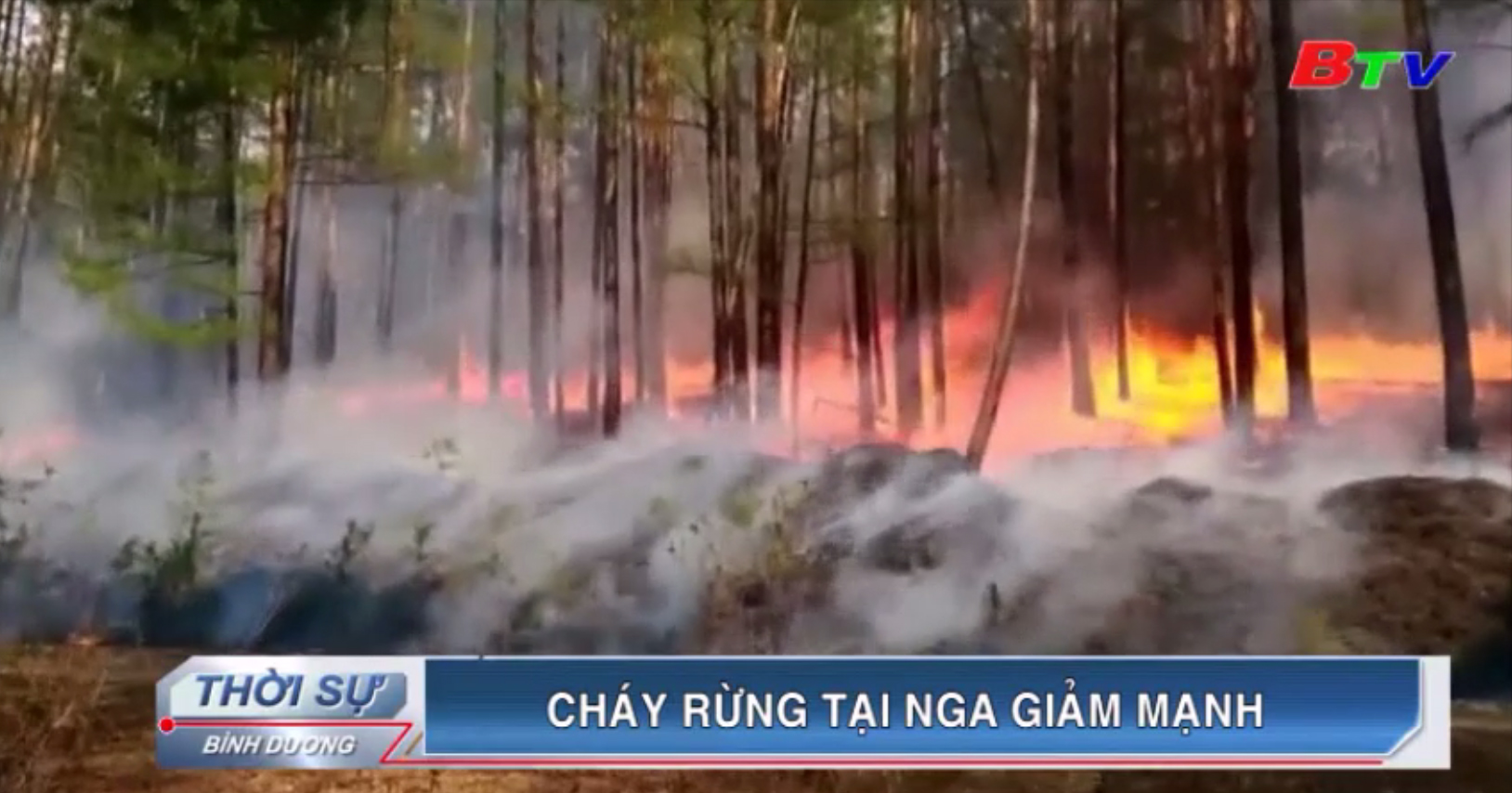Cháy rừng tại Nga giảm mạnh