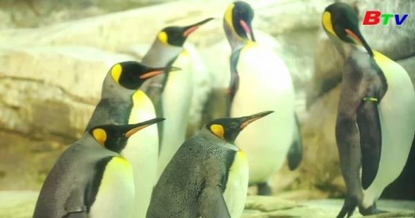 Lạ kỳ đôi cánh cụt đồng tính sắp có con ở Berlin, Đức