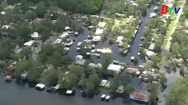 Bang Florida nỗ lực khôi phục mạng lưới điện bị tàn phá do bão Irma