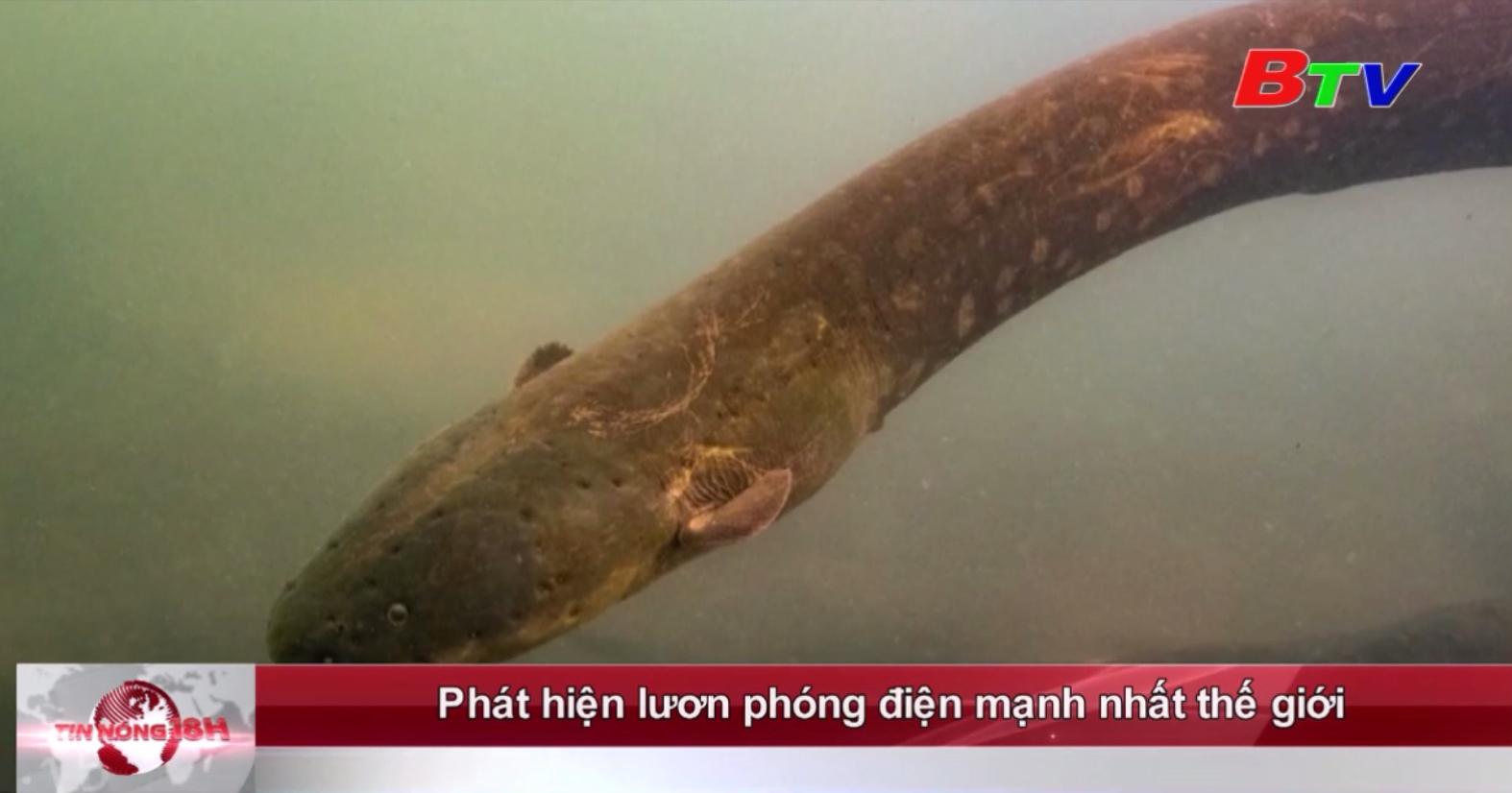 Phát hiện lươn phóng điện mạnh nhất thế giới