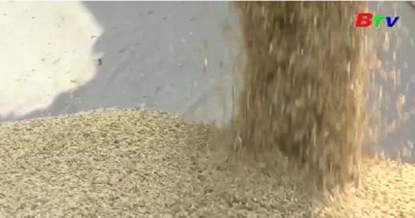 Khai mạc Festival lúa gạo Việt Nam lần IV vào tháng 12 tới