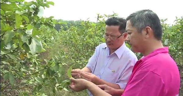 Khát vọng nâng tầm giá trị nông sản Việt
