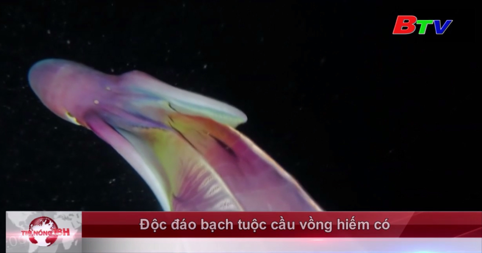 Độc đáo bạch tuộc cầu vồng hiếm có