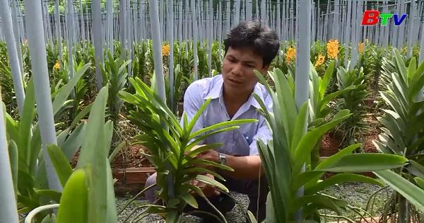 Mô hình canh tác hoa lan Mokara cắt cành