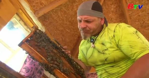 Litva: Độc đáo cách trị liệu bằng ong