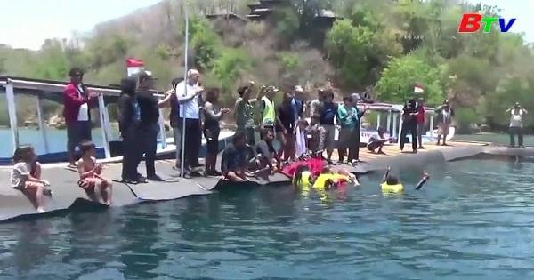 Indonesia giải cứu cá heo khỏi một hồ bơi