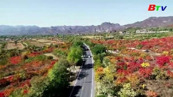 Lợi ích của công viên cây xanh đối với kinh tế thế giới