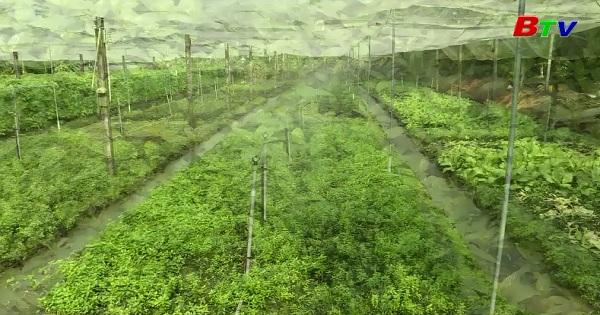 Kỹ thuật trồng rau an toàn theo hướng hữu cơ