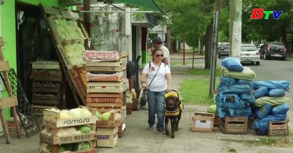 Ghé thăm trường đào tạo chó dẫn đường cho người khiếm thị  ở Argentina