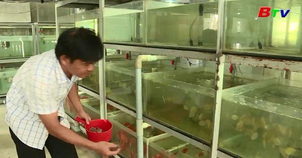 Làm giàu từ mô hình nuôi cá cảnh