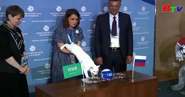 Mèo tiên tri Achilles đã dự đoán Nga đánh bại Saudi Arabia  trong trận khai mạc World Cúp