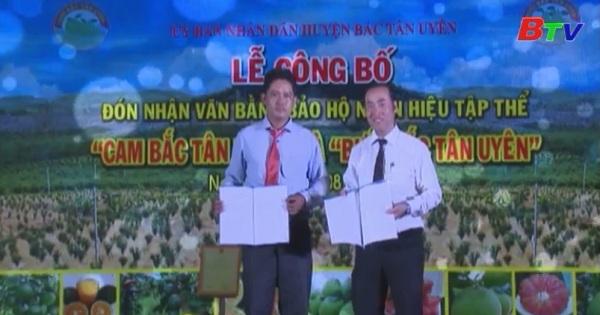 Cam Bưởi Tân Uyên được cấp chứng nhận nhãn hiệu tập thể