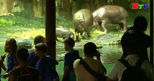 Khu bảo tồn động vật hoang dã cho ra mắt các thú con quý hiếm vừa mới chào đời