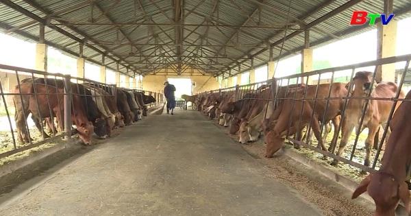 Công tác thú y trong chăn nuôi bò thịt cao sản