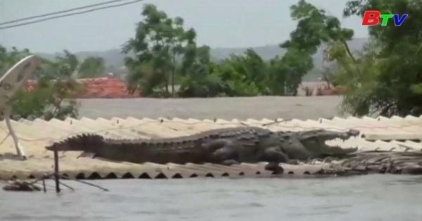 Cứu hộ cá sấu ở Ấn Độ