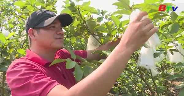 Hiệu quả từ việc trồng cây ăn trái hữu cơ