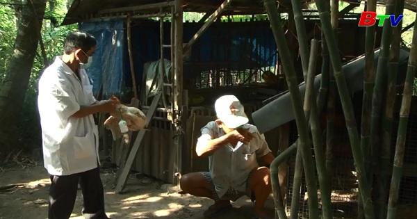 Tiếp tục phòng ngừa và ngăn chặn dịch cúm trên gia cầm