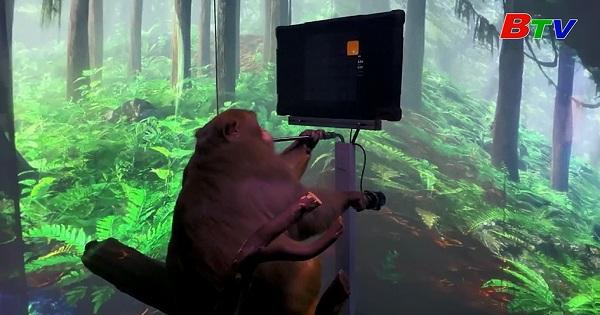 Chơi trò chơi điện tử qua chip cấy vào não bộ