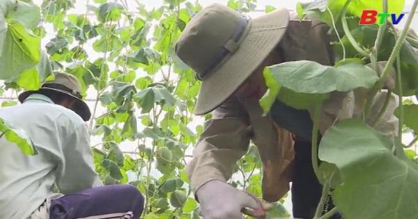Nhiều hoạt động hỗ trợ nông dân sản xuất