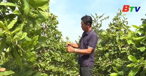 Đạt danh hiệu thợ giỏi từ đam mê trồng mai