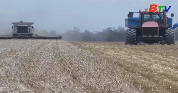 Australia đe dọa kiện Trung Quốc lên WTO