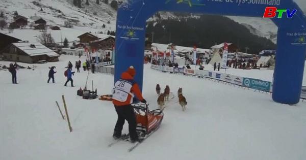Sôi động cuộc đua chó kéo xe trượt tuyết tại Pháp