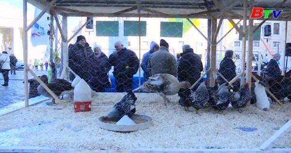 Lễ ban phước lành cho động vật ở Roma, Italia